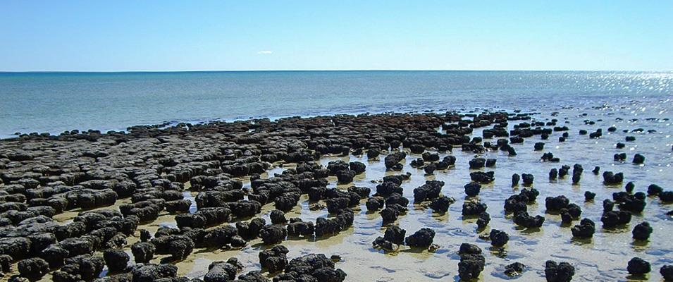 ICE FT 1 | Shark Bay, Western Australia: Sediments and Stromatolites