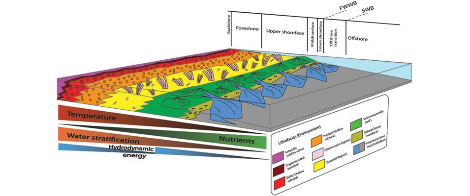 Arabian carbonate reservoirs: A depositional model of the Arab-D reservoir in Khurais field, Saudi Arabia