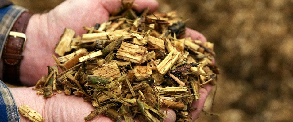 Biomass Energy Basics:  A Renewable Energy Certificate Course